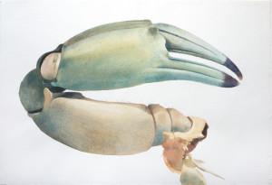 Crab #2 crop